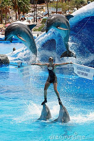 How do you become a dolphin trainer at Seaworld?