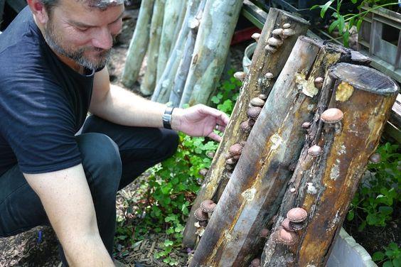 Starting a Mushroom Garden – 5 ways to get growing