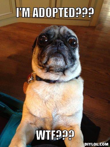 Funny Dog Meme Generator : Wtf pug meme generator i m adopted e c b g