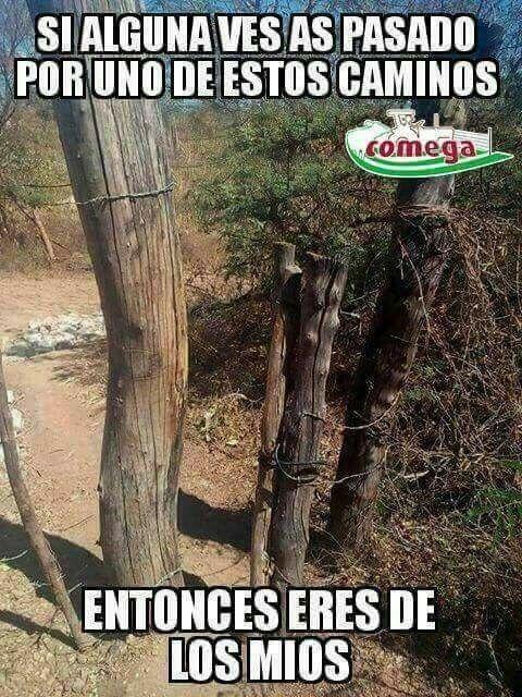 Pin By Maria Cardenas On Pedasito De Sol Elizabet Tree Plants Tree Trunk