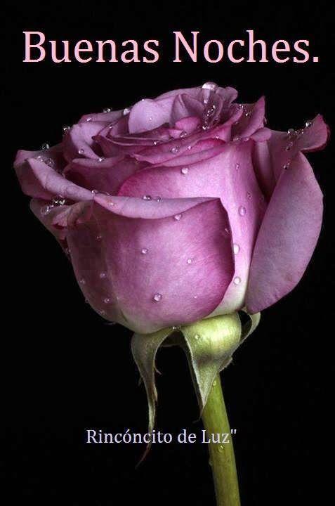 Versos De Buenas Noches Para Descargar Gratis Rosas Purpuras