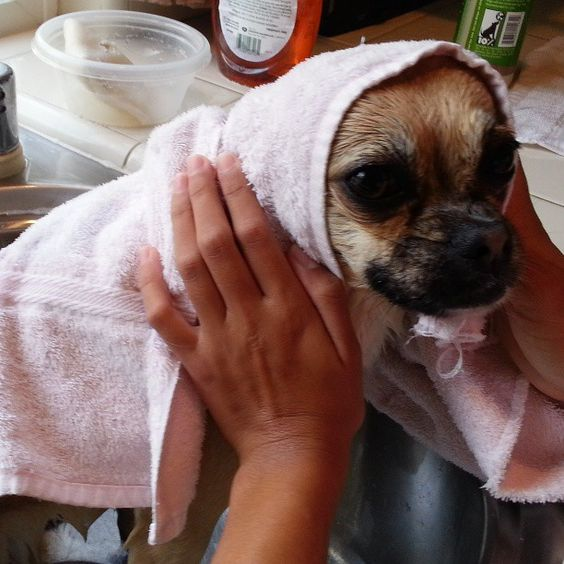 Bath time. Photo by contessaboutique
