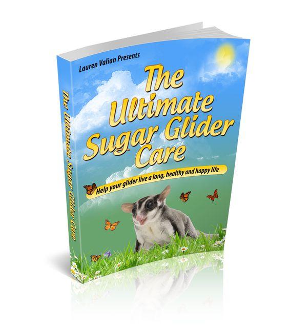 Ultimate Sugar Glider Care Guide