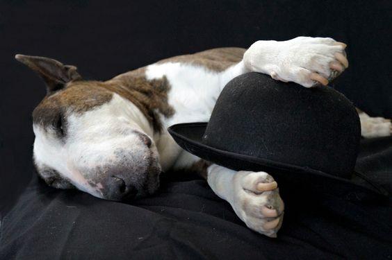 #Bull #Terrier Stitz