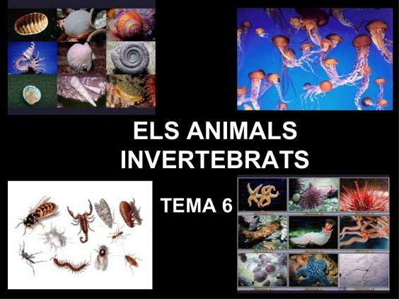 Invertebrats