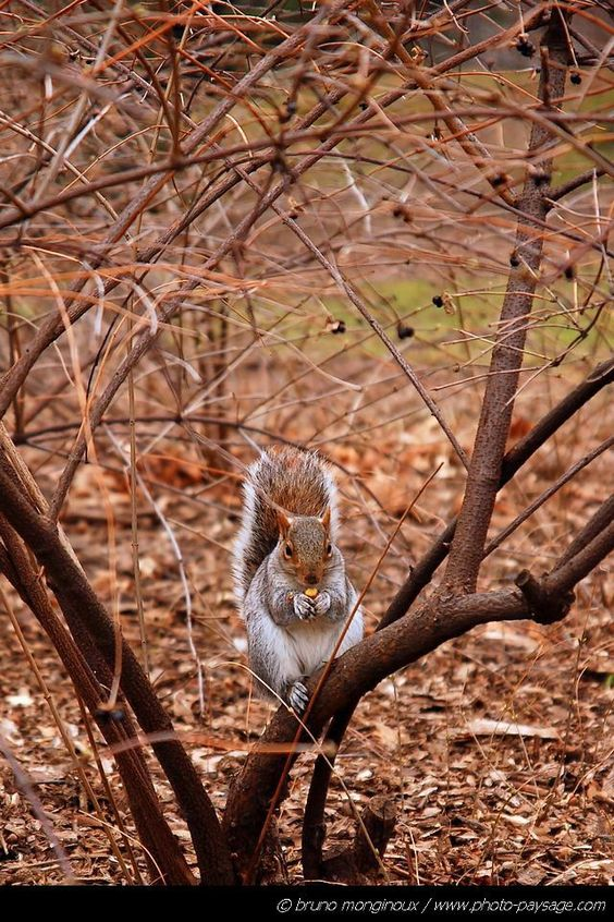 A sweet squirrel in Central Park / Wildlife - Landscape wallpapers