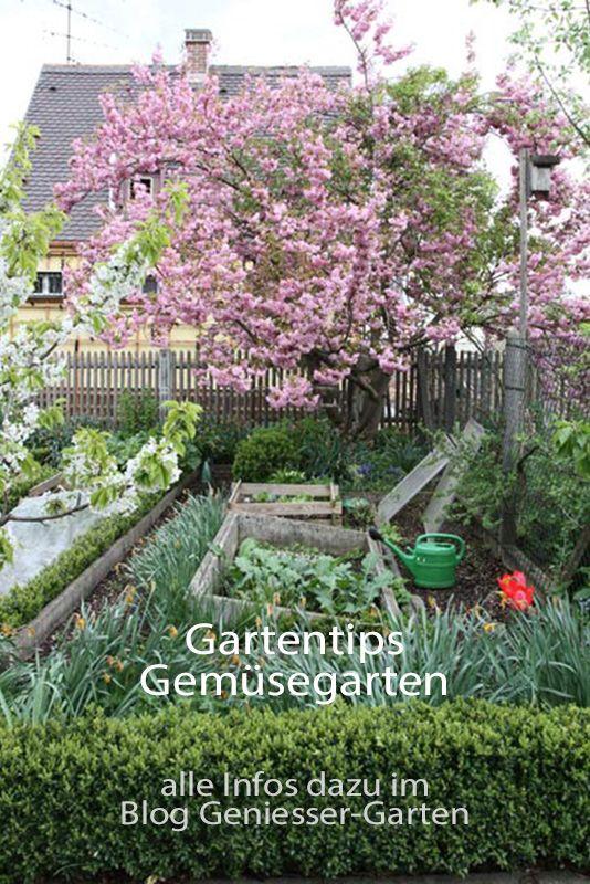 Gartentips Zum Gemusegarten Seit Mehr Als 30 Jahren Ernten Wir Gemuse Tomaten Und Obst Aus Dem Eigenen Garten Meine Erfa Garten Gartenarchitekt Garten Planen