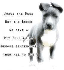 Pitbulls..i have met plenty of sweet loving pits! and fyi for anyone who didn't know pit bulls are NOT the only dogs that were bread to fight...boxers, bull dogs, staffshire terriors (if im spelling that right) are all fighting dogs, and the staffshire terrior is also considered a pit bull! educate yourself people, you say these dogs were born to fight well so are those other breeds and people don't have a problem with them!