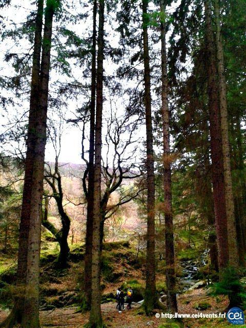 Séjour linguistique en Irlande avec le CEI  #Irlande #Ireland #Europe #CEI #voyage #travel #colonie #sejourlinguistique #holiday #nature #trees #forest #Arklow