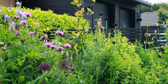 EN SYMPATISK HAVE - A sympathetic garden