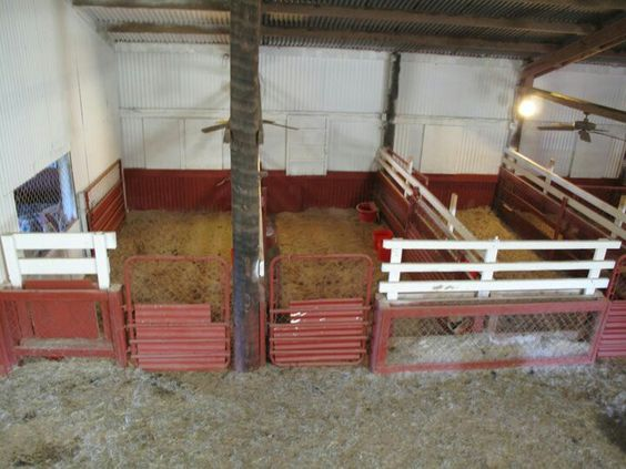 Large Kidding Pens Just Add A Heat Lamp In The Corner For
