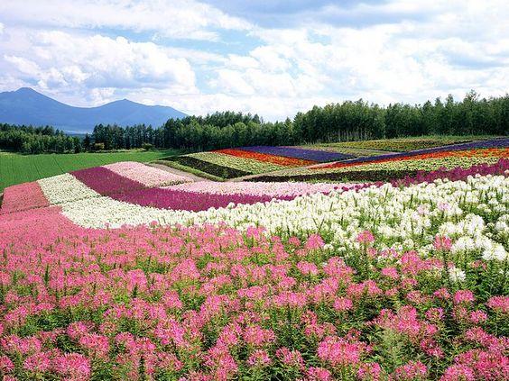Hokkaido tourist attractions