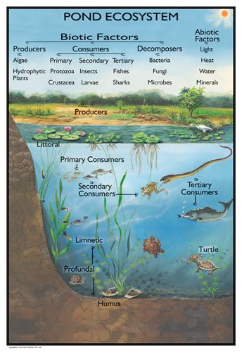 "ecology research paper pond Ecology research paper ranging from a ""duck pond on haverford college campus"" to ""the wikipedia for information on species' ecology and natural."