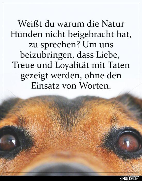 Weisst Du Warum Die Natur Hunden Nicht Beigebracht Hat Lebensweisheiten Spruche Spruche Spruche Zitate Leben