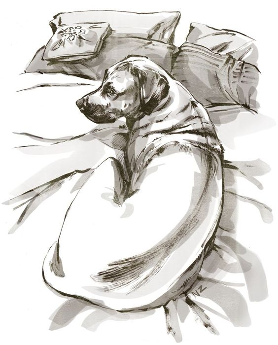 Beast on the bed - illustration by Natalya Zahn