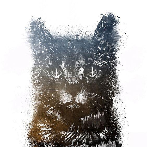 Gray cat Lucky