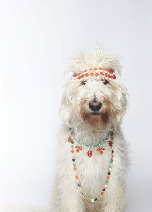 Cutest shaggy white hippie dog. #cutestdog Amazing Dog Houses and Adorable Puppies to Pin