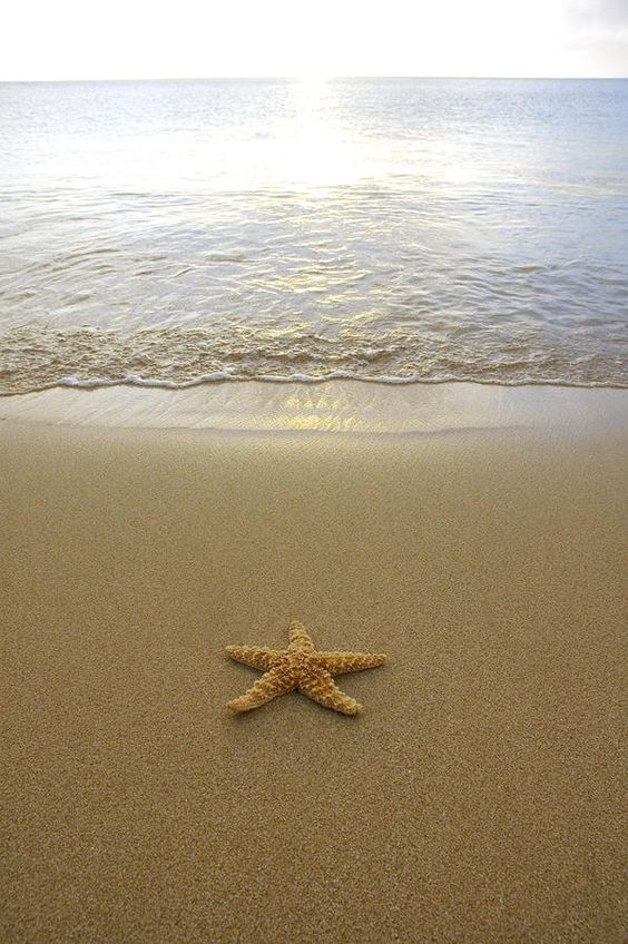 Starfish On Beach | Starfish, Cas and Make a difference