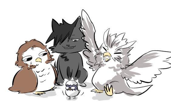 Haikyuu!! | Kuroo Tetsurou | Tsukishima Kei | Bokuto Koutarou | Akaashi Keiji| 黒猫がまだ殻が完全に割れてないヒナ捕まえて来たらしい…ボクトスァンが育てたいってわがまま言ってるのをあかーしが捕まったヒナ可哀想…って見てる