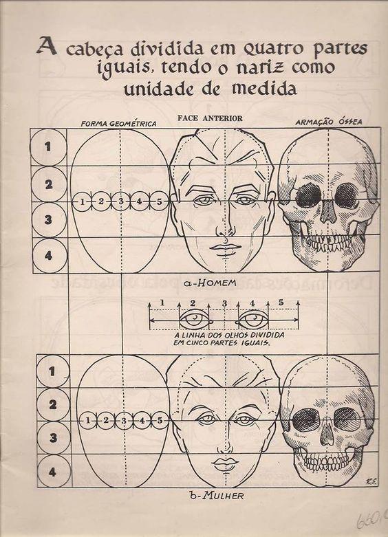 A cabeça dividida em quatro partes iguais, tendo o nariz como unidade de medida
