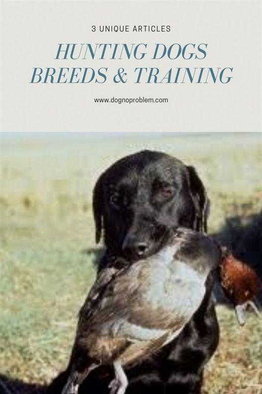 Dog Training In My Area Dog Training Pads Large Dog Training