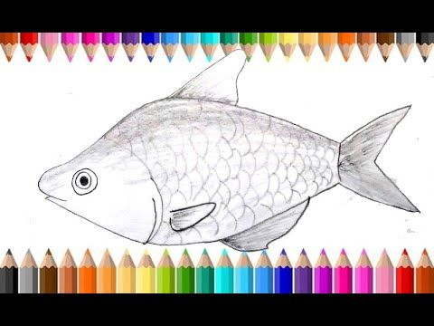 How To Draw A Fish Fish Drawing Pencil Sketch Step By Step Fish Drawings Drawing Tutorials For Kids Drawing For Kids