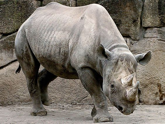 What is the actual endangered animal problem?