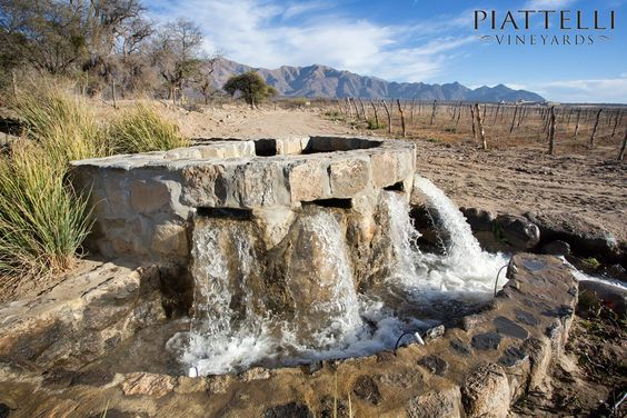 Irrigation at Piattelli Vineyards Cafayate winery.