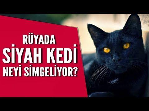 Ruyada Siyah Kedi Gormek Mehmet Emin Kirgil Videolu Ruya