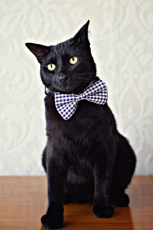 Cat Wedding Bow Tie Collar - Harbor