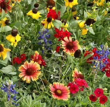 oklahoma wildflower landscape | Gardens