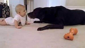 Esta pequeña gatea por primera vez y va hacia su perro.