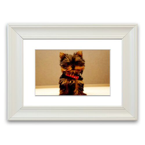 Yorkshire Terrier Puppy Cornwall Portrait Framed Wall Art East Urban Home Size 93 Cm H X 126 Cm W Yorkshire Terrier Puppies Yorkshire Terrier East Urban Home