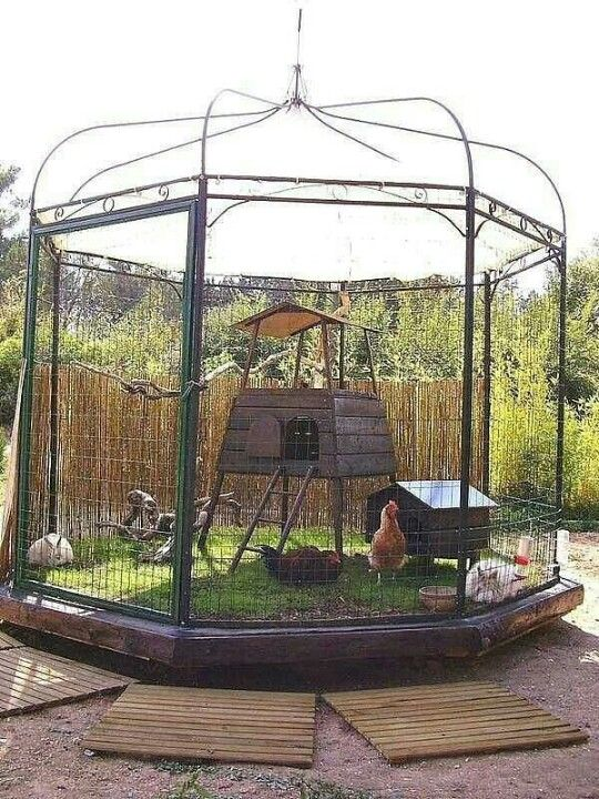 Chicken coops that you will go totally clucky over the for Gazebo chicken coop