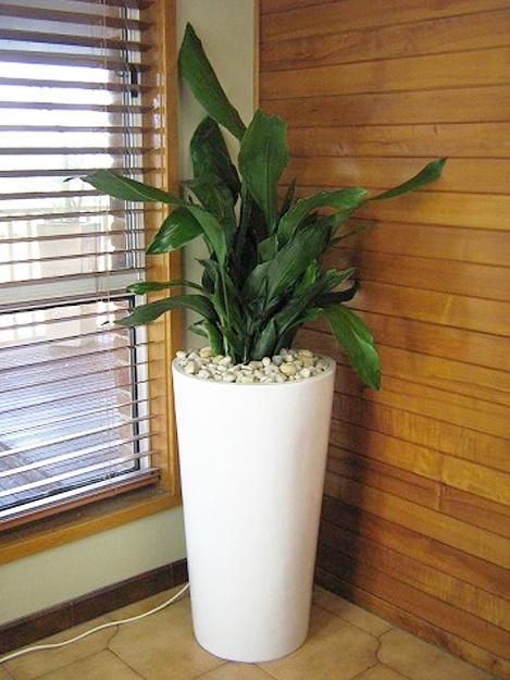 House plant in tall container for empty space decorating. Via Lushhome.