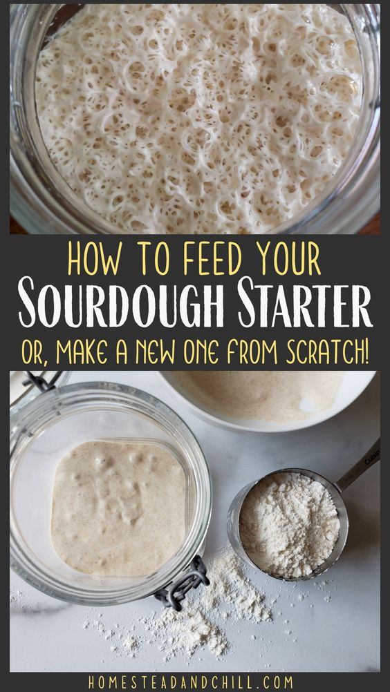 How to Create & Feed a Sourdough Starter