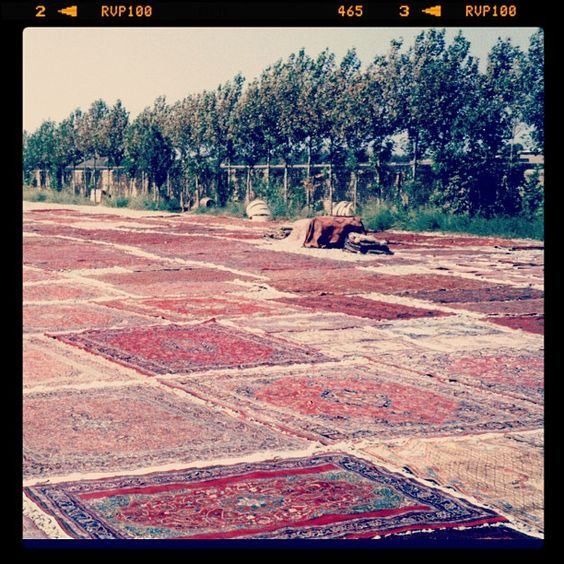 """@feizyrugs's photo: """"Field of Rugs in #India #throwbackthursday #loveofrugs #rugs #india #lookingback"""""""
