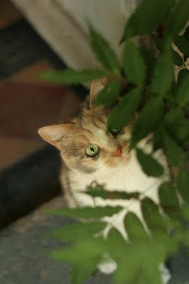 Tabby in the Ferns