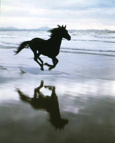 35 Beautiful #Horse Pictures And Photos Gallery