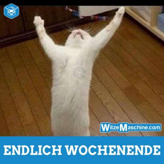 Endlich Wochenende - Lustige Katze betet vor Glück | Montag Witze ...