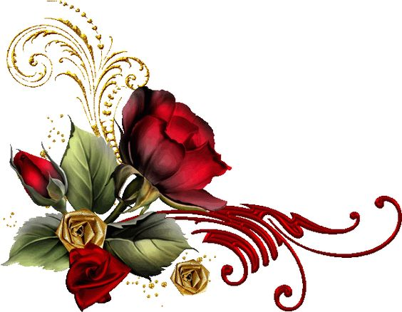 Red rose: