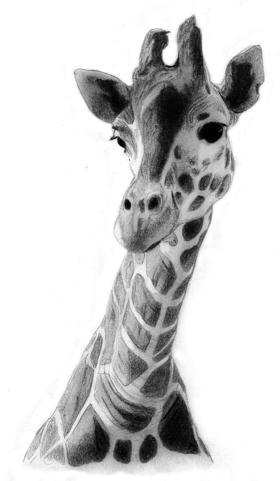 Giraffe Drawing | Giraffe Drawing by ~QZJavs on deviantART ... Cool Giraffe Drawing