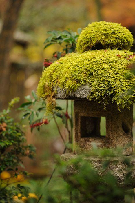 Moss on Lantern - Kosan Temple in Northwest of Kyoto. #Plants #GreenThings #Foliage