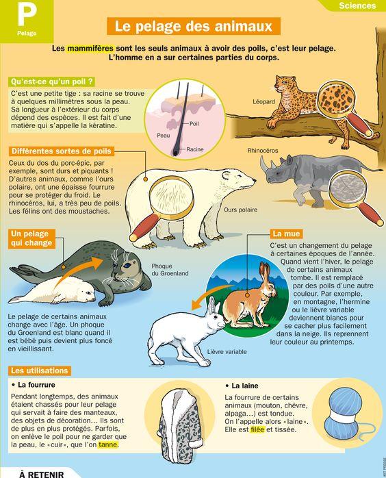 Fiche exposés : Le pelage des animaux