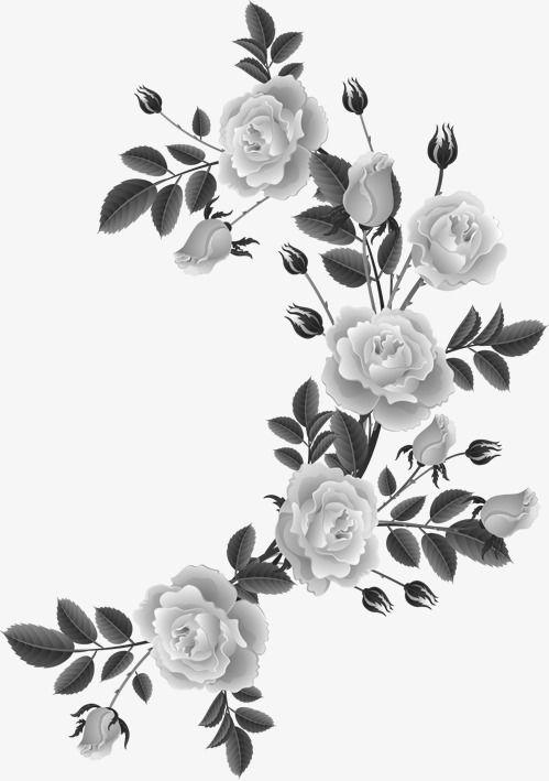 Rose Rosas En Blanco Y Negro Flor Frontera Boarders Corners