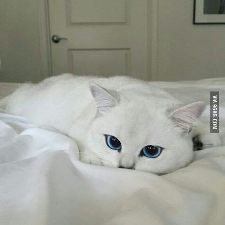 When a cat is prettier than me.
