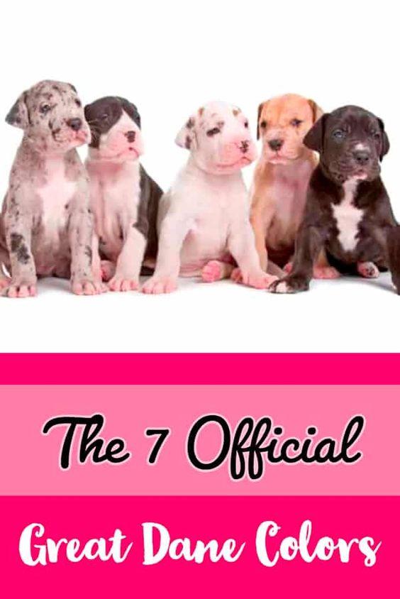 Official Great Dane Colors Deutsche Doggen Deutsche Dogge Deutsche