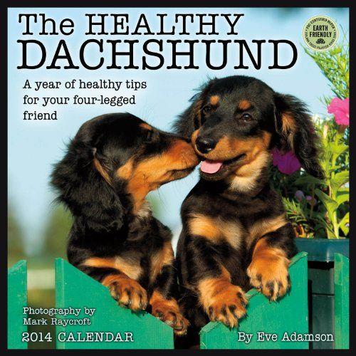 Healthy Dachshund 2014 Wall Calendar