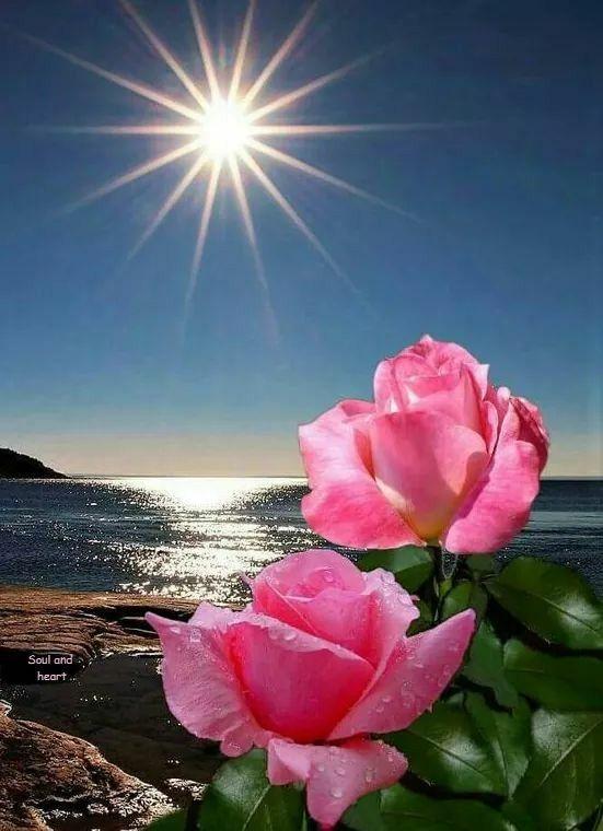 Bom Dia Meu Amor Bjssstá Linda Flor Da Lua Rosas