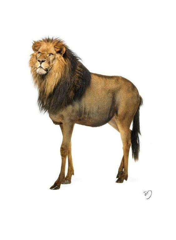Leão-Gnu (Foto: Sarah DeRemer)